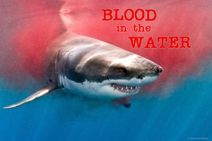 Blood in the Water Fowler Murphy TenNapel